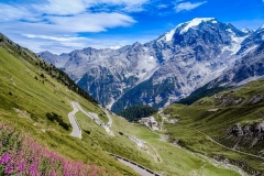 Pink blossom, green meadows,white mountain and blue sky at the Stelvio Pass (Italy)